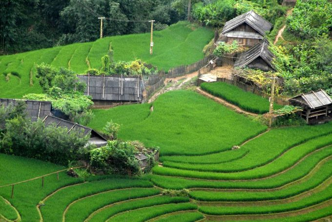 Terraced rice In full flush of youth
