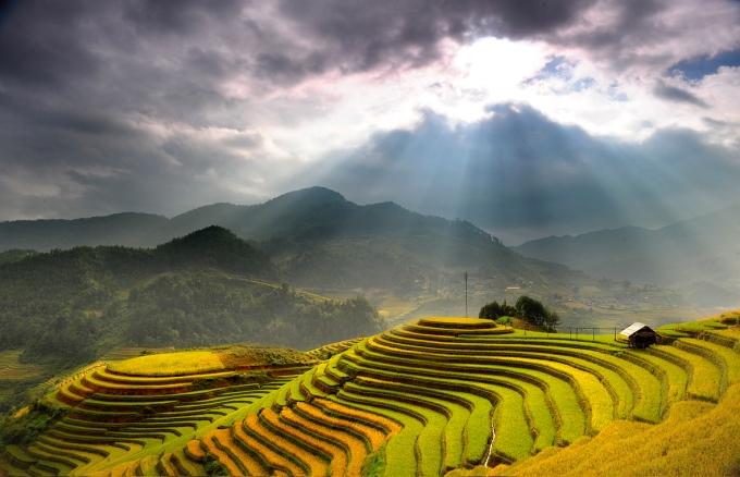 Ha Giang terraced fields: Picturesque of an abundant crop