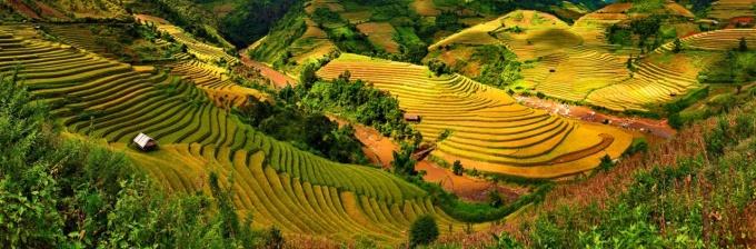 Picturesque of an abundant crop