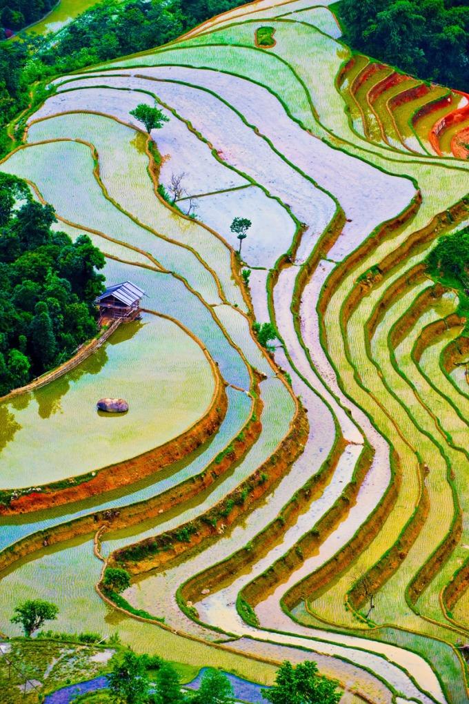 Beautiful terraced fields