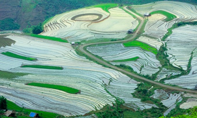 Terraced fieds in Yen Bai - A national heritage