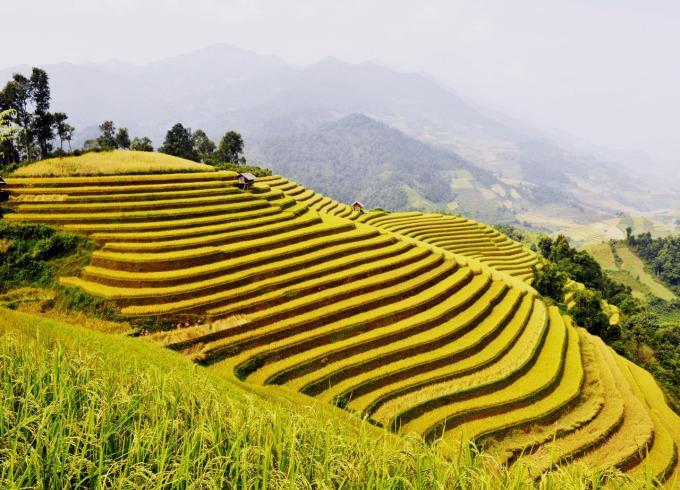 Mu Cang Chai terraced fields